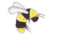 007 bee