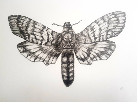 BEACON dead head hawk moth